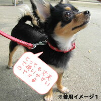 TENNYテニーなめし革首輪本革100%日本製12mm幅首廻り21-26cm【小型犬/プレゼント/ギフト/記念日/誕生日】