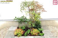 【ナンテンセット】ナンテン樹高約1m)マンリョウ(15cmポット)センリョウ(10.5cmポット)オタフクナンテン(12cmポット)ヤブコウジ(9cmポット)フッキソウ(9cmポット)庭木・植栽セット