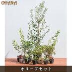 【オリーブセット】 オリーブ/シモツケ/マホニアコンフーサ/ヒメウツギ/ノシランビッタータス/ヒューケラ 庭木・植栽セット
