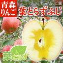 蜜入り青森弘前りんご 葉とらずふじ わけあり