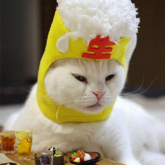 猫  服>コスプレ・パーティー猫服>ビールで乾杯にゃ