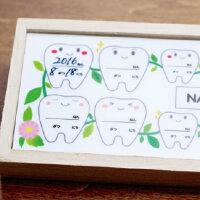 乳歯ケース内プレート見本
