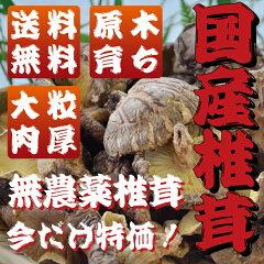 送料無料 訳あり 乾燥 干しシイタケ 椎茸 大分産 たっぷり 90g 平成26年度産 国産 九…