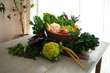 鎌倉野菜セット