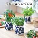 トマトの栽培キット