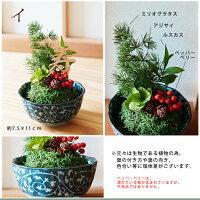 盆栽/苔玉1/和風アレンジ/誕生日プレゼント彼女/誕生日プレゼント恋人