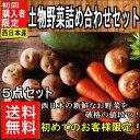 【初めてのお客様限定!】西日本産 土物野菜詰め合わせセット5