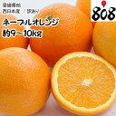 【送料無料】【西日本産】訳あり ネーブルオレンジ 大きさおま