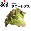 【送料別】【福岡県産】サニーレタス 1パック 約300g【野菜詰め合わせセットと同梱で送料無料】野菜