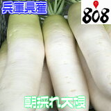 【送料別】【兵庫県産】朝採れ大根 1本 約2kg【野菜詰め合わせセットと同梱で送料無料】
