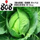 【送料無料】【産地厳選】低農薬 キャベツ 1箱 大きさお任せ