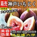 【兵庫県産】神戸いちじく 生 1ケース 6パック入 約3kg...