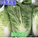 【送料別】【兵庫県産】白菜 1個 約2kg【野菜詰め合わせセットと同梱で送料無料】野菜宅配/母の日 2