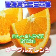 ネーブル オレンジ オフクーポン