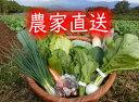九州佐賀の農家直送野菜セット【常温便】【10品詰め合わせ+こだわりの【たまご】