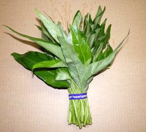 夏の葉物野菜として重宝する、栄養価の高いお野菜です。炒め物はもとよりおひたし・和え物・卵...