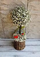 カスミソウのトピアリー お誕生日 ホワイトデーのお返し お祝い 結婚祝い 出産祝い 母の日 バレンタイン 感謝の気持ち 生花のカスミソウ ホワイトデー