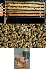 ミツバチ飼育4枚群入門キット