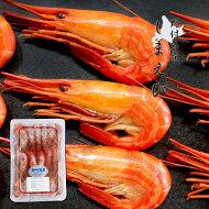 期間・数量限定北海シマエビ500g(約35匹前後)北海道野付名産海産物お取り寄せ北海シマエビは「海のルビー」と呼ばれる高級えび海老高栄商店お取り寄せグルメ
