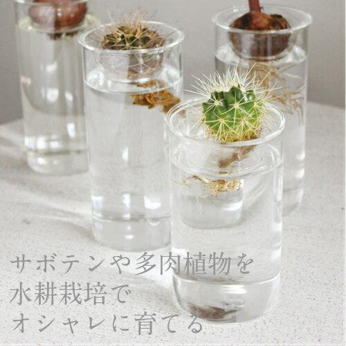 BULB VASE SHORT/バルブベースショート【水耕栽培 サボテン 多肉植物 球根 フラワーベース 贈り物 カフェ 北欧】