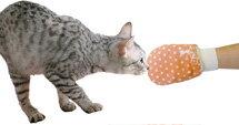 ○ ターキー ねこモテグローブ05 NMS-05 (ペット/猫/ネコ/またたび/マタタビ/国産)