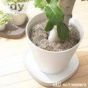 《全3色》tidy プランタブル L 植木鉢トレー テラモト Plantable L 【ティディ 観葉植物 デザイン雑貨 ...
