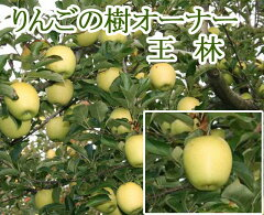 「趣味:都会でりんご栽培」はいかが?りんごの木オーナーになって、ガーデニング感覚で気軽に...