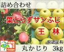 葉とらずサンふじ・王林 詰め合わせ 丸かじり約3kg 県認証有り ★赤いりんごと青りんごの2...