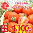 【送料無料】今話題のミニトマト★北海道名寄産トマトベリー【サイズ混合】 約1.5kg入(正規品) ※7月中旬以降収穫後のお届けとなります。【マラソン1106P02】