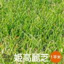 芝生 姫高麗芝 1平米【普通便】【送料無料】(ただし北海道 / 沖縄 / 離島 を除く)