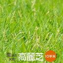 芝生 高麗芝 10平米【普通便】【送料無料】(ただし 北海道 / 沖縄 / 離島 を除く)