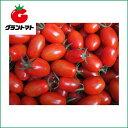 アイコミニトマト1000粒 野菜種子【とまと】【取寄商品】
