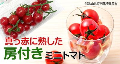 ミニトマト美味房(おいしんぼう)