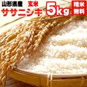 米 玄米 5kg ササニシキ 令和2年産 山形県産 精米無料 白米 無洗米 分づき 当日精米 送料無料