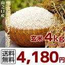 無農薬玄米 29年産 川内さんのヒノヒカリ 4kg(2kg×2袋)【産...