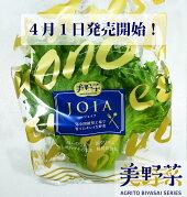 美野菜低カリウムレタス