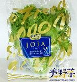 美野菜 低カリウムレタス(約80g×20パック)