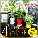 選べるかわいいミニ観葉植物4鉢セット /観葉植物/新築祝い/開店祝い/誕生...