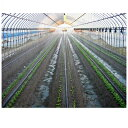 住化農業資材 スミサンスイ M 200m巻 孔径0.2mmφ 潅水チューブ 灌水チューブ