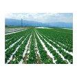 オークラ(大倉) 農ポリ こかげマルチ デラックス 0.025mm×180cm×200m 2本入 農業資材 園芸用品 家庭菜園 マルチフィルム