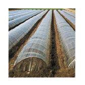 オークラ(大倉) 透明 一般用農ポリ 0.07mm×540cm×100m 1本入