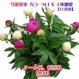 芍薬花束 3本増量 13本束でお届け カラーMIXシャクヤク しゃくやく