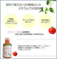 バクチャー植物02