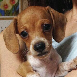 APDCティーツリーシャンプー犬用500ml