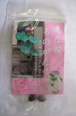 古の都 京都の地で栽培された蓮...種から蓮を育ててみませんか。蓮たねものがたり(種から育て...