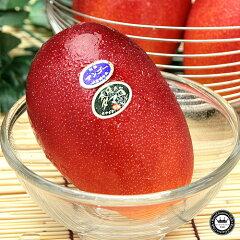 [ロイヤルガストロ] 自然に落果するまで収穫しない完熟フルーツ♪【6月お届け】 宮崎マンゴー ...