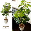 光触媒人工植物 Kapok 〔カポック〕