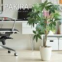 光触媒 観葉植物 パキラ 人工観葉植物 造花 消臭 V-CA...