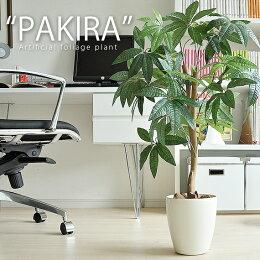 光触媒植物 パキラ