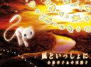 【オリコン加盟店】期間生産限定盤[取]■小林幸子&中川翔子 CD【風といっしょに】19/7/10発売【楽ギフ_包装選択】